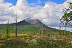 Tundra in the foothills of Putorana plateau. Royalty Free Stock Photo