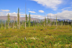 Tundra in the foothills of Putorana plateau. Stock Photos