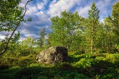Tundra im Sommer Stockfoto