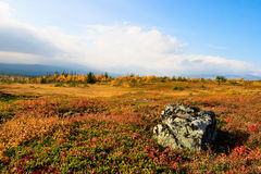 Tundra landscape Royalty Free Stock Photo