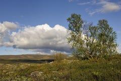 Tundra mit Birken lizenzfreies stockfoto