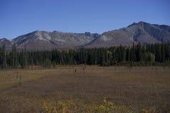Tundra mit schwarze Fichten-Bäumen und Berg Lizenzfreie Stockbilder