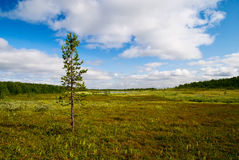 Tundra of north Russia Royalty Free Stock Photo