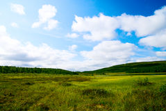 Tundra north of Russia Royalty Free Stock Photography