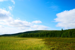 Tundra north of Russia Royalty Free Stock Images