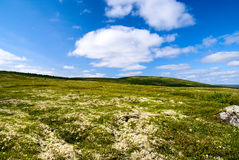 Tundra north of Russia Royalty Free Stock Photos