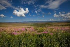Tundra på Alaska arkivfoton