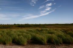 Tundra por día en verano Foto de archivo libre de regalías