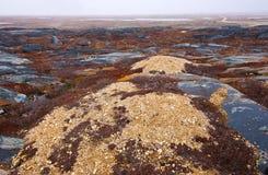 Tundra snow Royalty Free Stock Photo