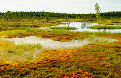 Tundra sooma Εσθονία στοκ εικόνες