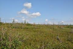Tundra sulla penisola di Taimyr fotografia stock