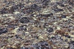 Tundra surface Stock Photo