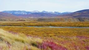 Tundra variopinta aromatica sparsa con i fiori fotografia stock libera da diritti