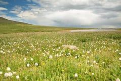 Tundra Vista Stock Image