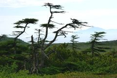 Tundra w Eurasia, mgła, lato zdjęcia stock