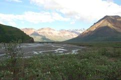 Tundra-Wildnis Alaska Denali Stockfotos