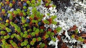 Tundra y océano Fotos de archivo