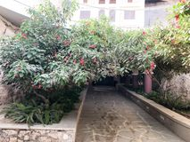 Tunel, łuk od pięknego zielonego krzaka, drzewo z zielenią opuszcza i czerwień kwitnie z płatkami i kamienną drogą zdjęcia stock