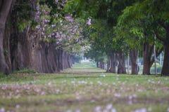 Tunel дерева стоковые изображения