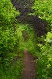 Tunel d'arbre photos libres de droits