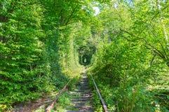 Tunel de l'amour dans la forêt verte Images stock