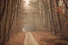 Tunel della foresta Fotografie Stock Libere da Diritti