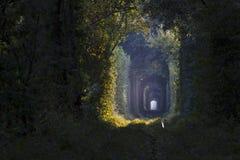 Tunel drzewa Zdjęcia Stock