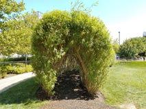 Tunel i ścieżka w robiących manikiur drzewach Zdjęcia Stock