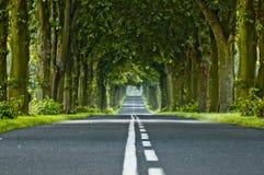 tunel jest drzewa fotografia royalty free