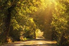 Tunel od drzew Fotografia Stock