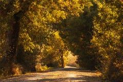 Tunel od drzew Obraz Royalty Free