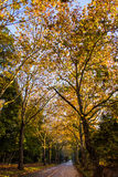 Tunel od drzew Fotografia Royalty Free