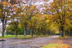 Tunel od drzew Zdjęcie Royalty Free