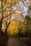 Tunel od drzew Obraz Stock