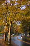 Tunel od drzew Zdjęcia Stock