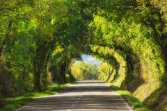 Tunel od drzew Obrazy Royalty Free