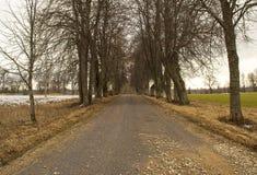 Tunel od drzew wiesza na jesieni drodze Obrazy Stock