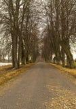 Tunel od drzew wiesza na jesieni drodze Zdjęcie Stock