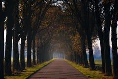 Tunel od drzew wokoło drogi Zdjęcie Stock