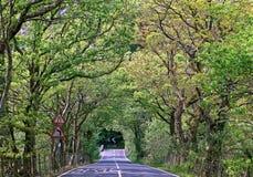 Tunel od zielonych drzew i krzaków w Snowdonia parku narodowym Obraz Royalty Free