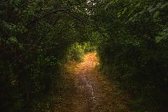 Tunel robić z zielonych drzew i roślinności Zdjęcia Royalty Free
