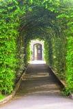 Tunel robić od drzew Fotografia Royalty Free