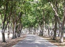 Tunel zieleni drzewa Fotografia Stock