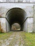 Tunelen till skogen Arkivbild