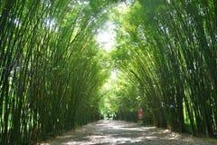 Tunelowi bambusowi drzewa i przejście obrazy stock