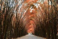 Tunelowi bambusowi drzewa i przejście obraz royalty free