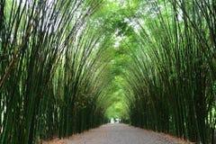 Tunelowi bambusowi drzewa i przejście zdjęcia royalty free