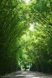 Tunelowi bambusowi drzewa i przejście obraz stock