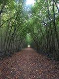 Tunelowi drzewa Obraz Stock
