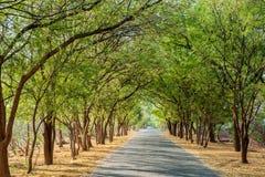 Tunelowy drzewo Zdjęcia Royalty Free